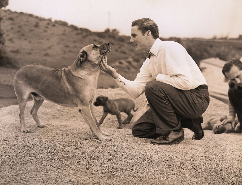 Image Source: Getty Images / Errol Flynn introduced the first Rhodesian Lion Hounds to the U.S.A.