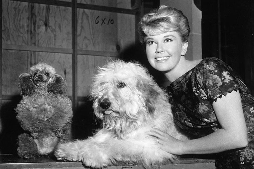 Image Credits: Getty Images / Hulton Archive | American actor Doris Day with mutt co-star Hobo on the set of director Charles Walters's film, 'Please Don't Eat the Daisies'. Also pictured is an unshaven toy poodle standing up on his hind legs.