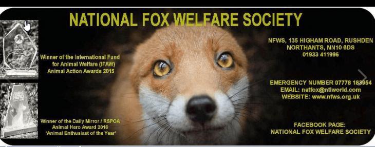 Image credit: Facebook/National Fox Welfare Society