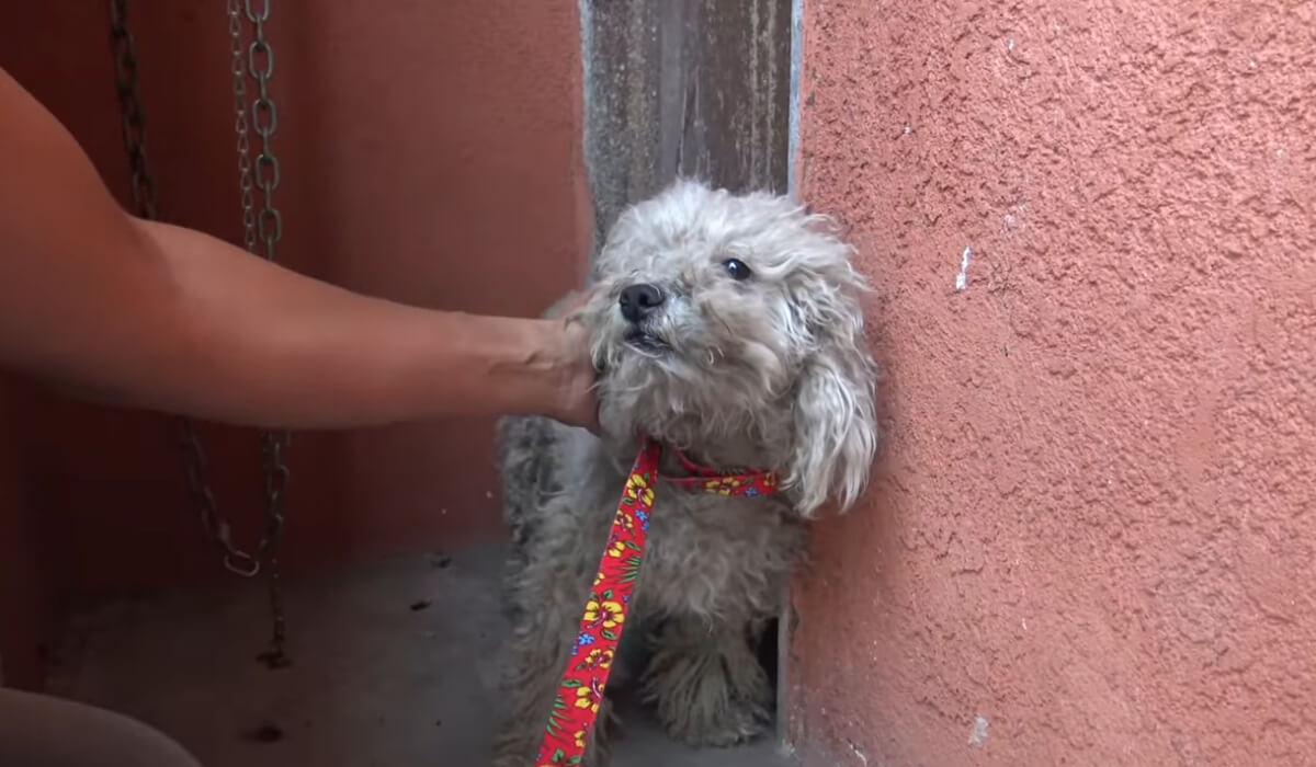 Image Credit: YouTube/Hope For Paws