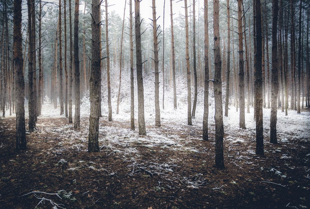 Landscape of spooky winter forest covered by mist | Shutterstock