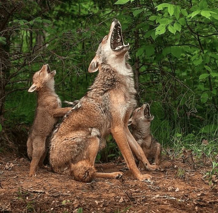 Image credits: Instagram/ wildlifeonearth