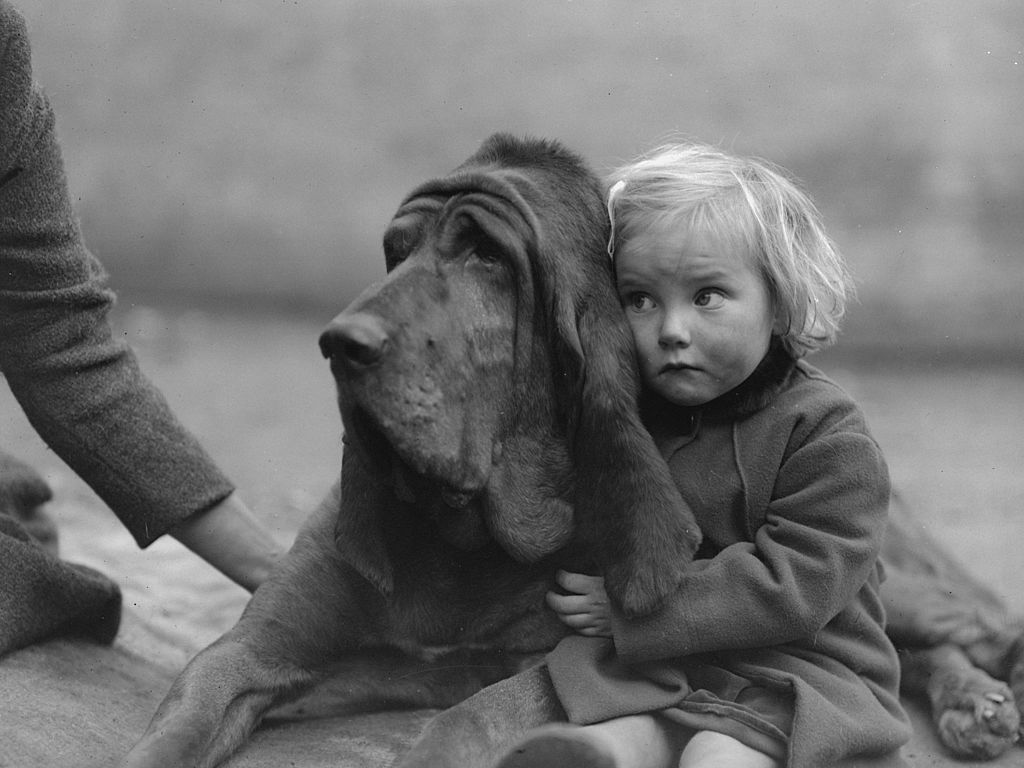 A little girl hugs Leo of Reynalton, the six-time champion bloodhound, in Birmingham, England, 1935. Image Credit: Getty Images