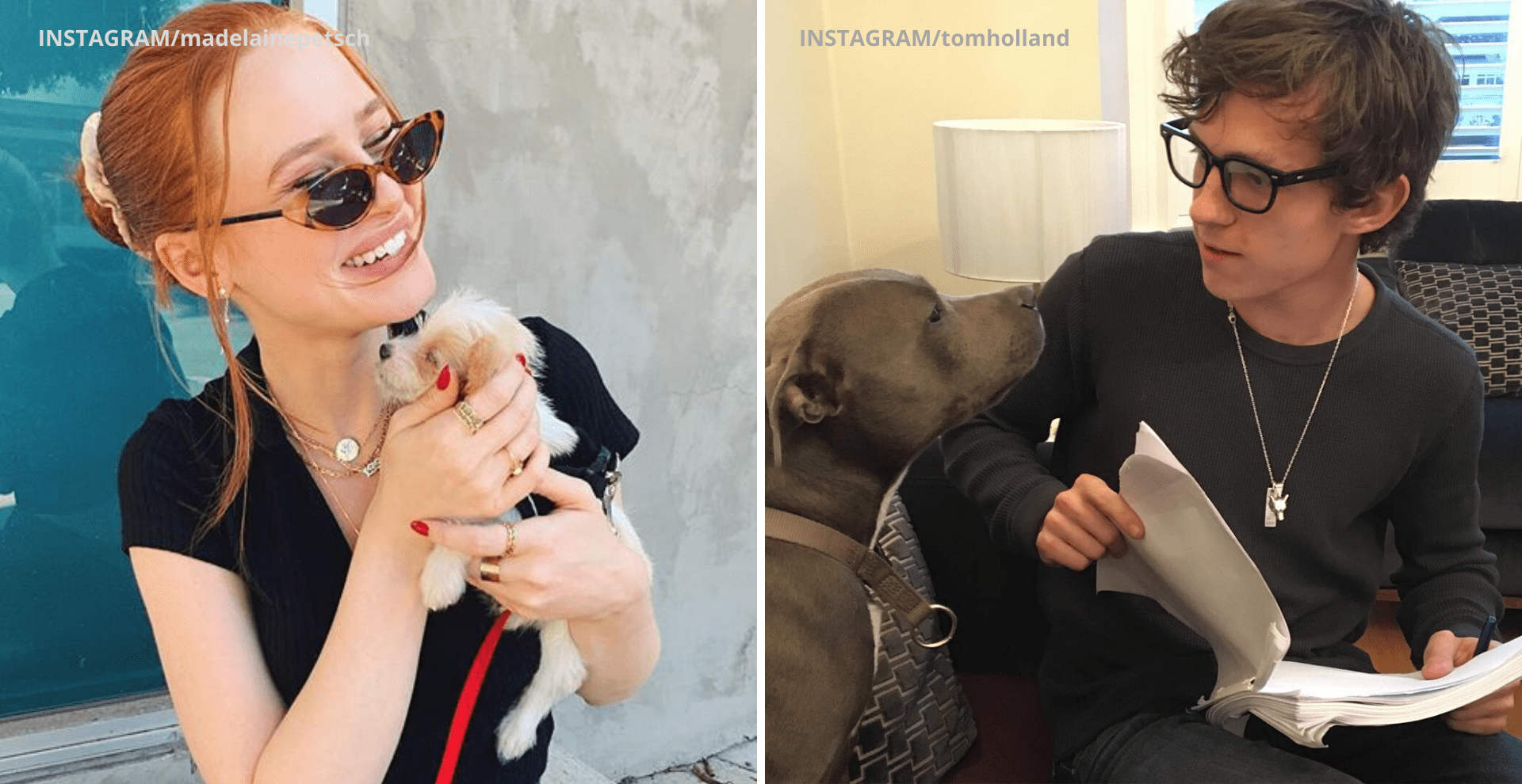 Celebrities Who Are Proud Dog Parents