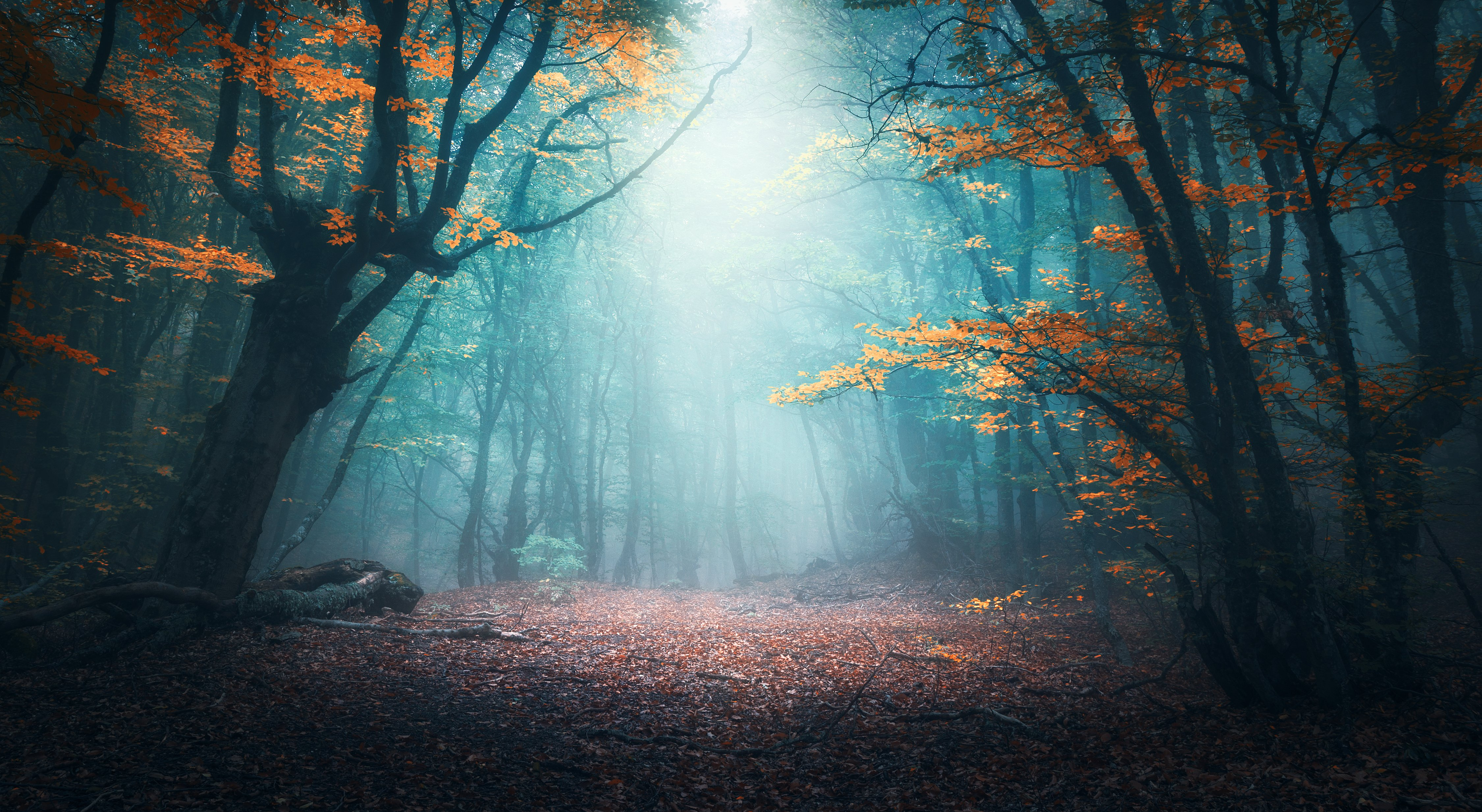 A scary forest | Shutterstock
