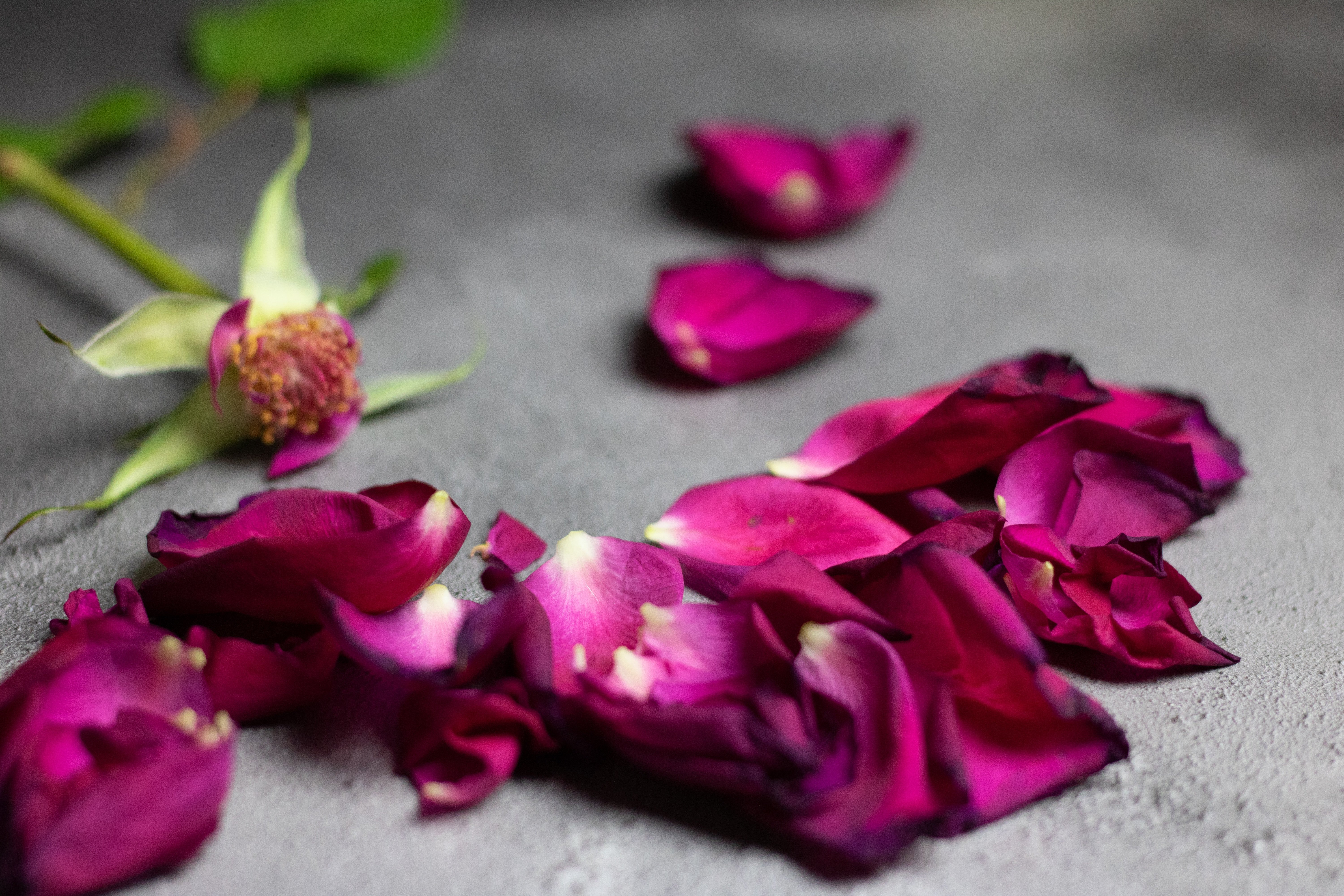 Discarded flowers | Unsplash