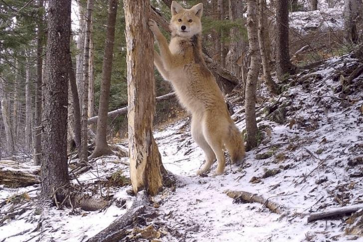 Astonishing Pictures Captured By Trail Cameras