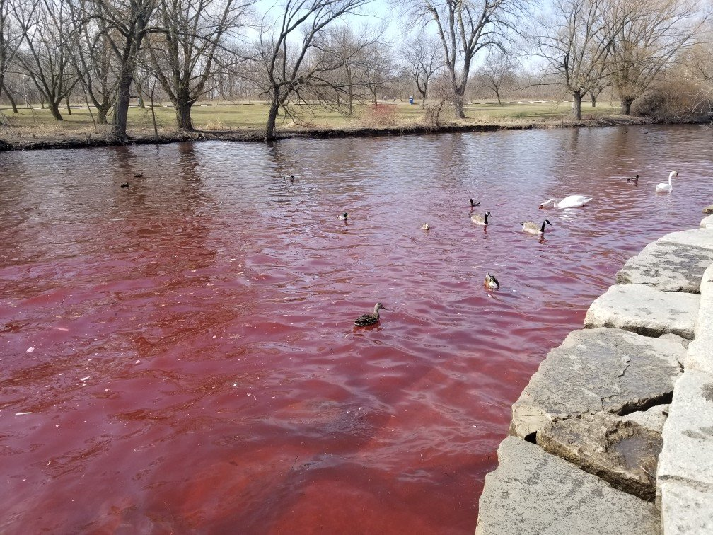 The Blood-Red Creek Of Ontario