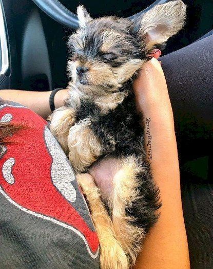 Crédito de imagen: Instagram/remy.the.puppy