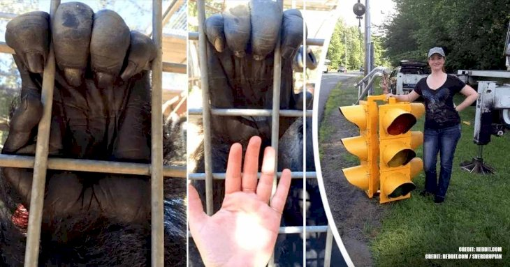 15+ Things That Are Actually Much Bigger Than We Could Imagine