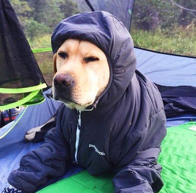 Image credits: Google Plus/Pet Insurance