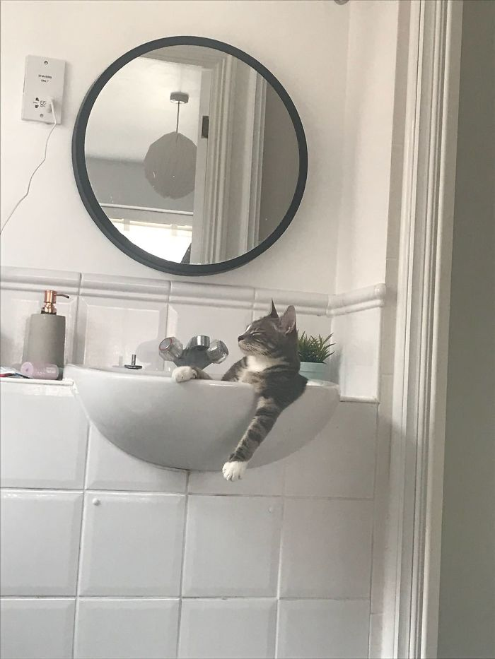 Image credits: Reddit/Ralph_the_Cat