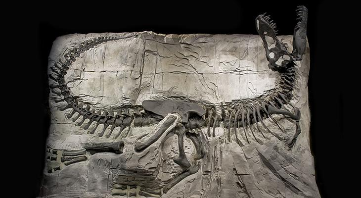Image Credit: Royal Tyrrell Museum/For illustrative purposes