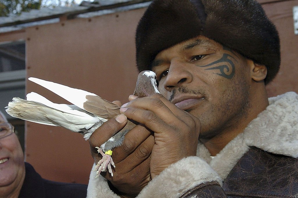 Image Credit: Getty Images / Former world heavyweight boxing champion Mike Tyson meets up with a pigeon fancier Horace Potts (L), of Bloxwich, Walsall, West Midlands on November 18, 2005.