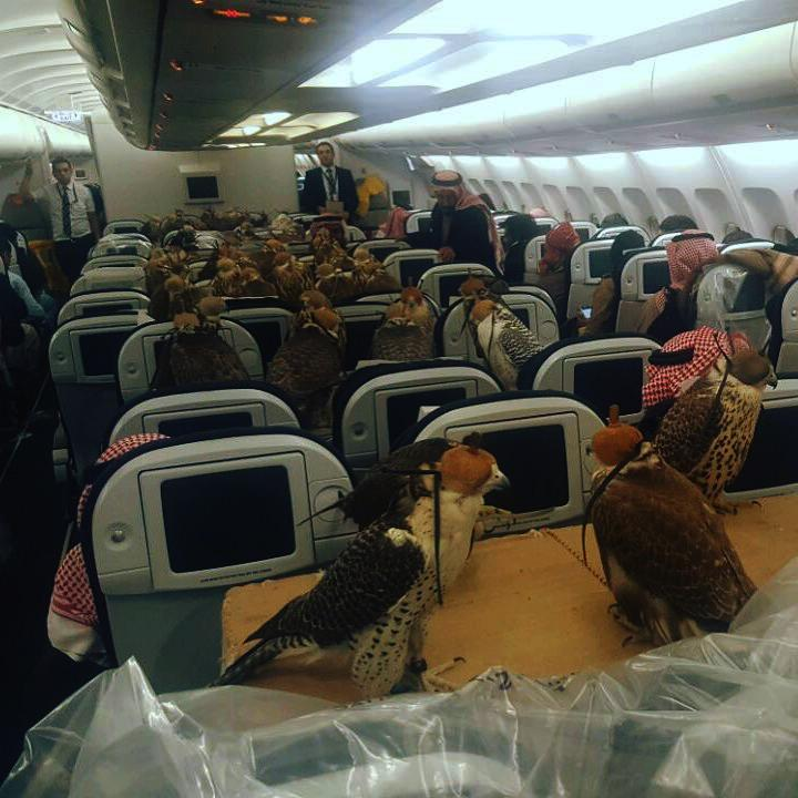 Funny Flight Pictures