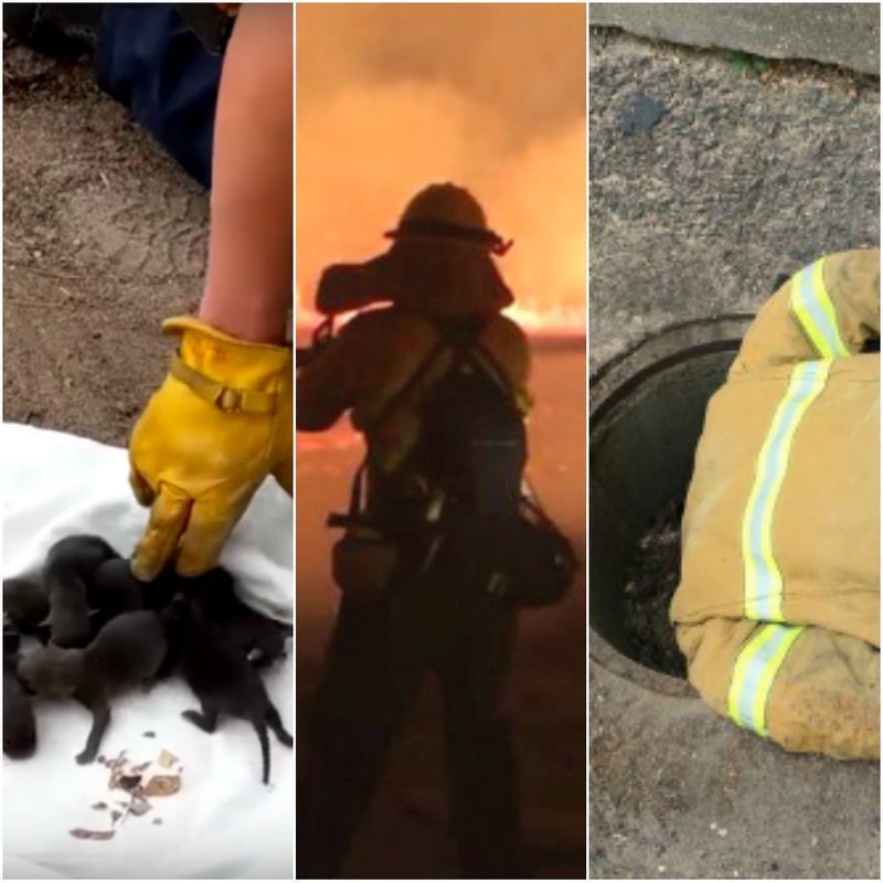 Firefighters Thought They Saved Puppies Lives
