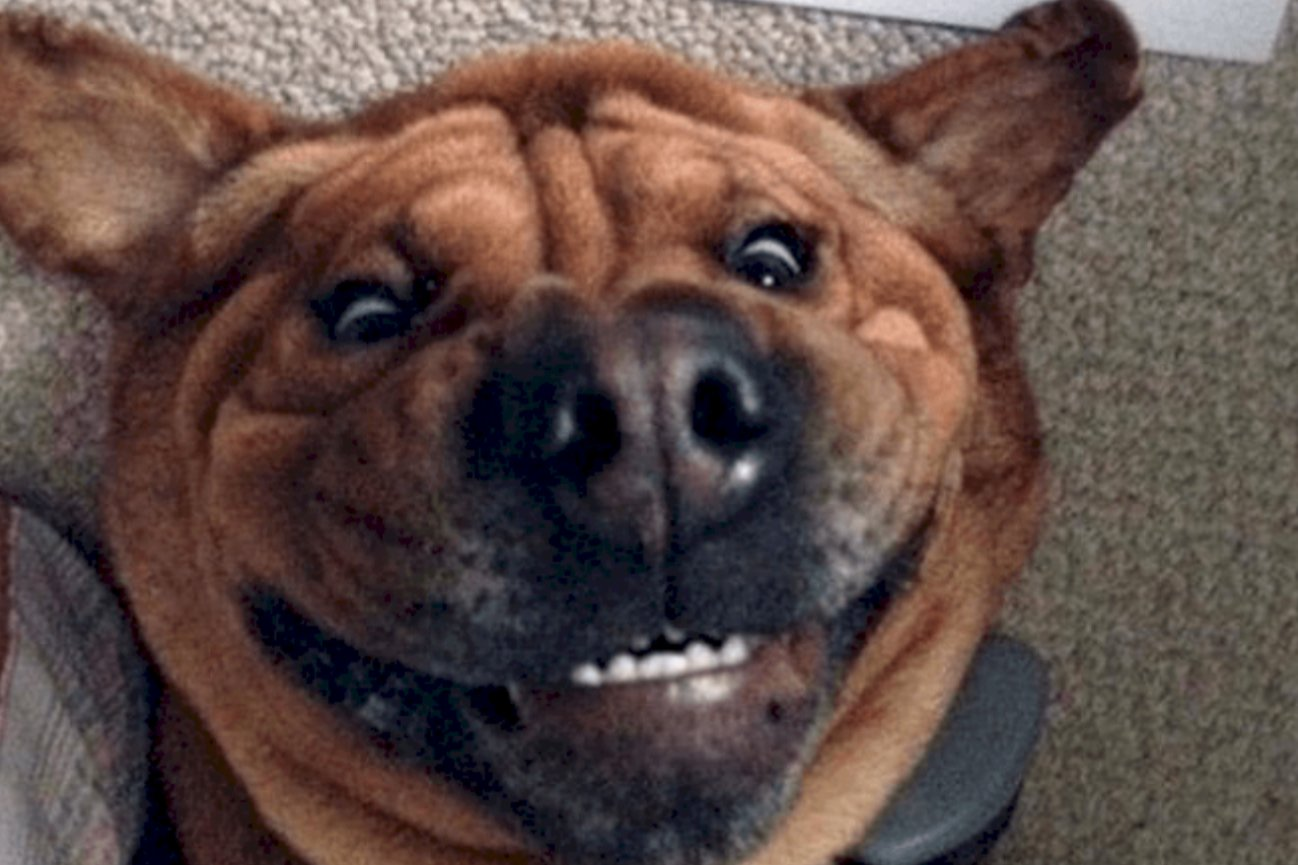 Hilarious Dog Photos That Are Too Funny Not To Share