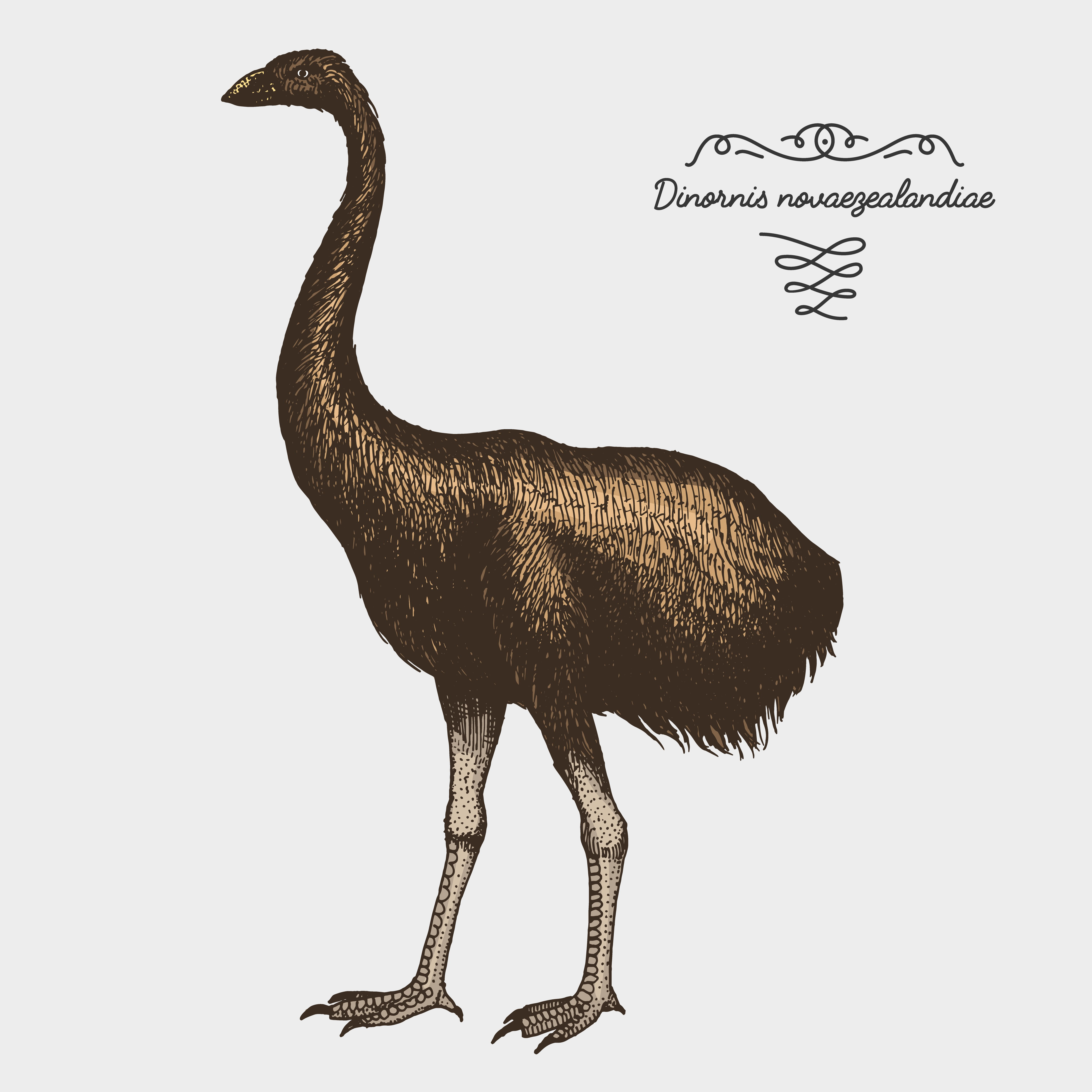 Hand drawn sketch of the moa bird | Shutterstock
