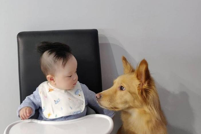 Babies and Pets: Cutest Photos On The Internet