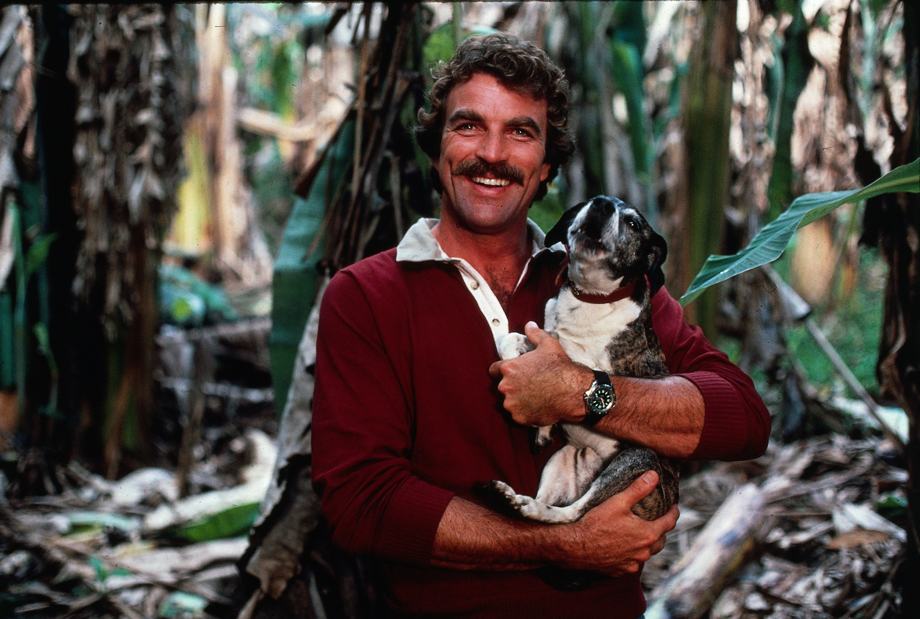 Image Credits: Getty Images | Tom Selleck's first wife made an appearance in Magnum, P.I.