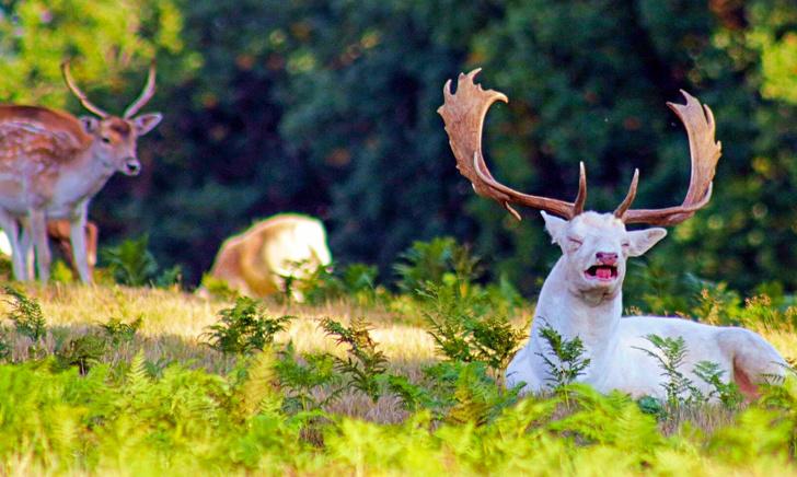 Image credits: Pikabu/kartinkoved